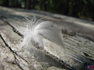 What can I say about a bird feather? Had I not been in such a hurry, I think I could have gotten a better photo.