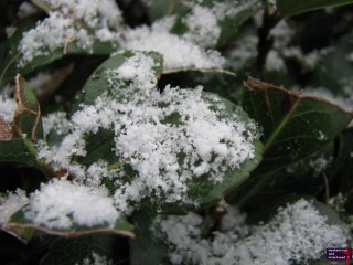 Snow crystals are so pretty. I wish I had been able to get a better picture of them.