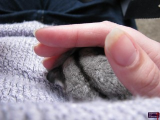Quantum sleeping in my hand.
